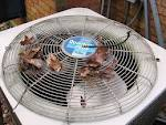 Air Conditioning Problems-coolquest-debris-ac-unit